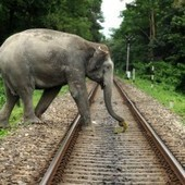 An Elephantine Crisis | CSRlive.in (CSR, Sustainability News, Analysis & Connect in India) | Scoop.it