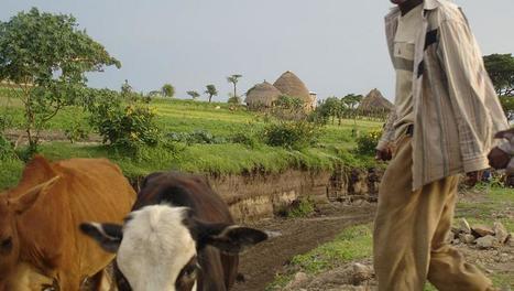 Ethiopie: les besoins en aide alimentaire augmentent - Afrique - RFI | Association solidaire, aide alimentaire , aide aux personnes en difficulté | Scoop.it
