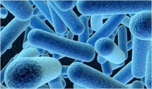 Mouth Bacteria Connected to Heart Disease | Netcastevent | Scoop.it