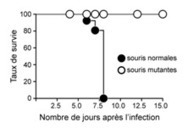 Une nouvelle voie pour stimuler le système immunitaire | 21st Century Innovative Technologies and Developments as also discoveries | Scoop.it
