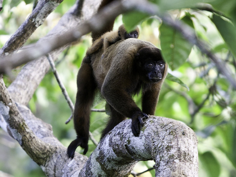 Episode 433: Holding A Rainforest Hostage? - NPR | Rainforest EXPLORER:  News & Notes | Scoop.it