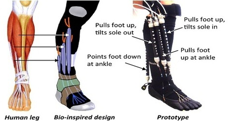 Bio-inspired robotic device could aid ankle-foot rehabilitation, researcher says (w/ video) | Innovation in industry | Scoop.it
