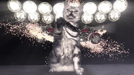 Litter Genie : quand la litière pour chat nous fait rêver | Fashion Pets | Scoop.it
