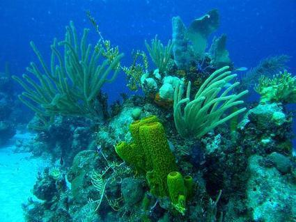 Cuba's Jardines de la Reina Reef—A Beacon of Hope in the Caribbean | World Resources Institute | In Deep Water | Scoop.it
