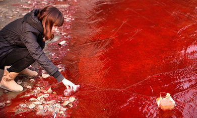 Chinese environment official challenged to swim in polluted river | EndGameWatch | Scoop.it
