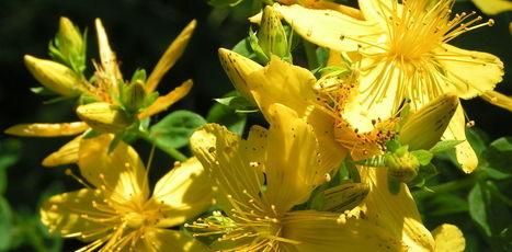 Les plantes sont de vrais médicaments | Chimie verte et agroécologie | Scoop.it