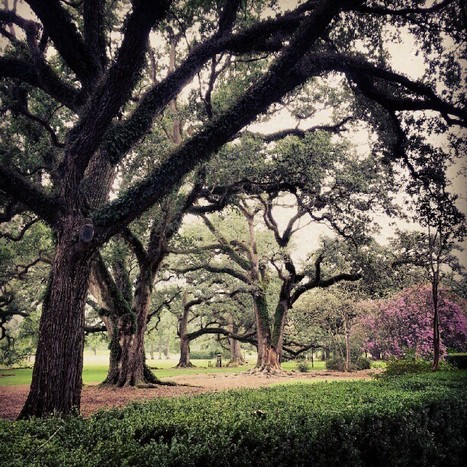 B.  Sandiford's Unique Photo! | Oak Alley Plantation: Things to see! | Scoop.it