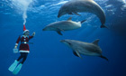 US Navy's mine-hunting dolphins will be replaced by robots in 2017 | Innovation in Oceanography | Scoop.it
