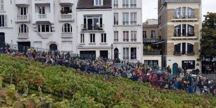Paris, à la recherche des vignes perdues