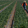 L impunité de Monsanto...