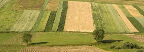 Des pistes pour mieux rémunérer les services environnementaux fournis par l'agriculture | Ecosystèmes Tropicaux | Scoop.it