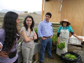 Hidroponía: la agricultura del futuro para Antofagasta | Cultivos Hidropónicos | Scoop.it