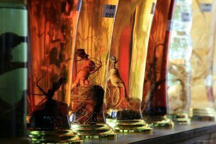 La médecine chinoise au secours des lésions de la moelle épinière | Médecine chinoise, l'actualité | Scoop.it