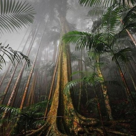 Are some forests more useful than others at stopping climate change? | Rainforest EXPLORER:  News & Notes | Scoop.it