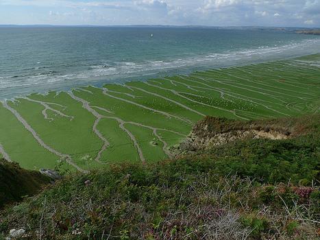 Quand les algues vertes, et leur gaz mortel, tuent aussi des hommes   Toxique, soyons vigilant !   Scoop.it