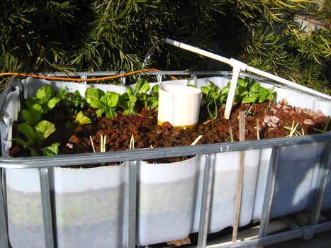 How To Build Your Own Aquaponic System | Agriculture urbaine, architecture et urbanisme durable | Scoop.it