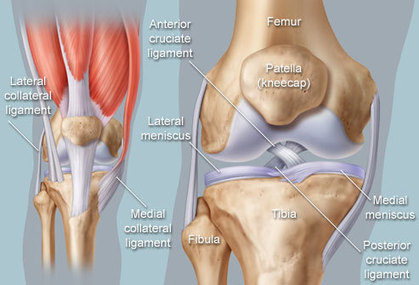 """""""Oh Doctor My Knee Hurts"""" 