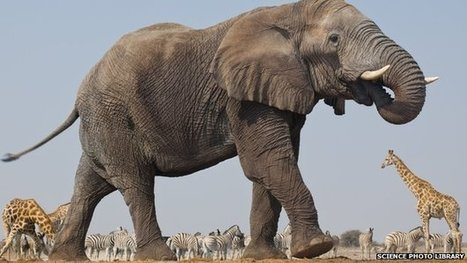 Elephant deaths reach tipping point   Animals   Scoop.it