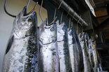 Fishing report: Rain needed to jump start salmon river run around Muskegon | Lake Effect... Fishing | Scoop.it