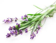 The Right Scents: Smells for Sleep (and Waking Up) | Aromatherapy for kids | Scoop.it