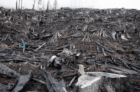 Ancient Forest News - Photo of Burnt Vancouver Island Clearcut Chosen for Exhibition in International Photography Competition in London | Reflections on two islands | Scoop.it