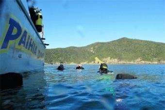 Paihia Dive, New Zealand - Unseen Hideaways   Vacation Getaways &  Retreats   Scoop.it