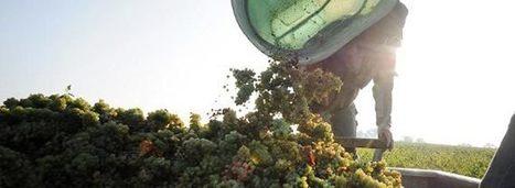 Loire Valley: Harvest Begins Along France's River of Wine   Vitabella Wine Daily Gossip   Scoop.it