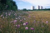 Cory Environmental Trust in Britain | CETB | Scoop.it