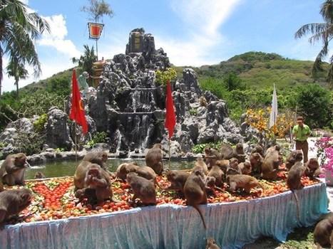 Tưng bừng lễ hội Hoa quả sơn trên Đảo Khỉ, Nha Trang | Vé máy bay đi Thái Lan giá rẻ | Scoop.it