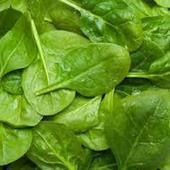 10 HEALTH BENEFITS OF SPINACH - News - Bubblews | Useful Health Information | Scoop.it