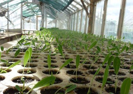 Des plantes hyperaccumulatrices de métaux lourds   Biodiversité et économie   Scoop.it