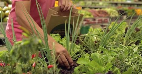 Et si on allait cueillir nos légumes au supermarché ?   Gastronomie Française 2.0   Scoop.it