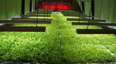 Chicago: Abandoned Food Factory To Become A Zero-Waste Vertical Farm | Vertical Farm - Food Factory | Scoop.it