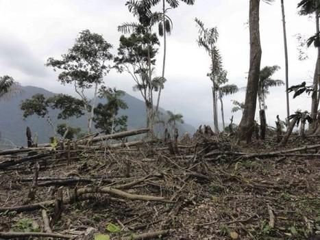Drones Cutting Down Illegal Logging In Amazon Rainforest | Drones | Scoop.it