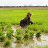 Rural Development Southeast Asia