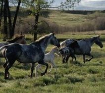 Michael Markarian: Animals & Politics: U.S. House Passes Bill to Protect Wild Horses | gov and law skinny | Scoop.it