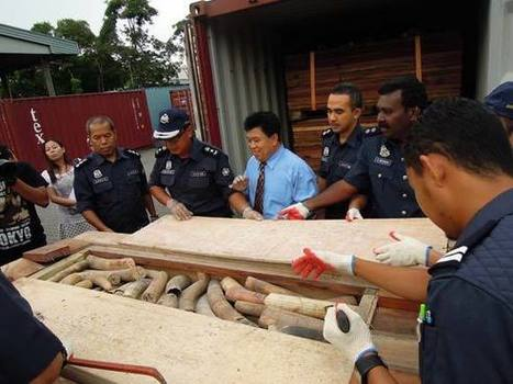 TRAFFIC - Wildlife Trade News - Southeast Asia in illegal ivory trade spotlight | Wildlife Trafficking: Who Does it? Allows it? | Scoop.it