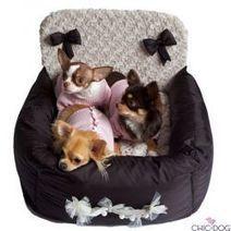 Baby Dog - Chic4Dog | Dog Style | Scoop.it