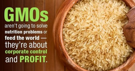 Five Things Monsanto Doesn't Want You to Know About GMOs | Taking a Stand | Scoop.it