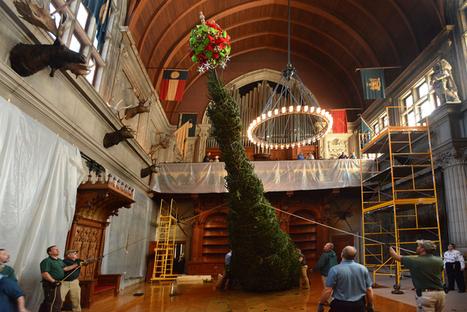 O Christmas Tree! | Biltmore | Holly & Ivy - Holiday Cheer & Recipes | Scoop.it