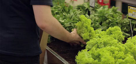 Un supermarché où vous pouvez cueillir les légumes | Solutions et propositions écologiques | Scoop.it