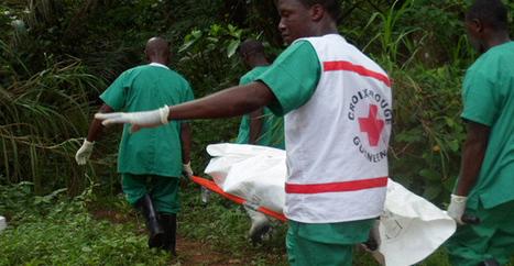 Ebola.com acheté 200 000 dollars   Actualités Afrique   Scoop.it