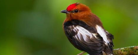 The ten sexiest male birds   Zoologie et Ethologie   Scoop.it