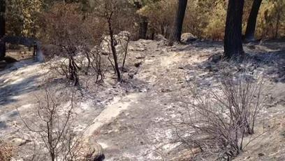 Mountain Fire human-caused, wildfire official says | How earth made us: Fire | Scoop.it