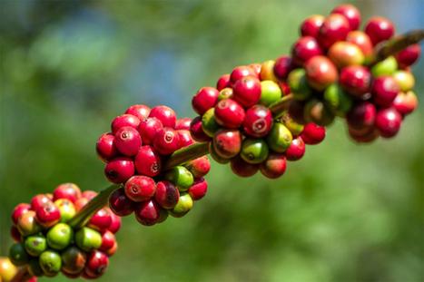 10 Mythological Origin Stories About Fruit - Listverse | EdTech | Scoop.it