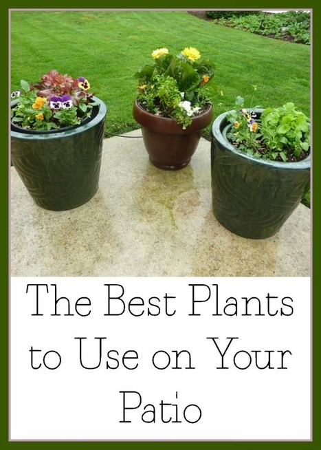 The Best Plants to Use on Your Patio | Homemaking | Scoop.it