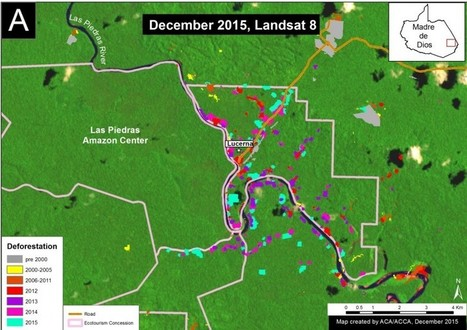 New deforestation hotspot threatens southern Peru's tremendous biodiversity | Rainforest EXPLORER:  News & Notes | Scoop.it