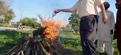 Plants ablaze - PakistanToday.com.pk | HINGOL NATIONAL PARK! | Scoop.it