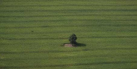 Les agriculteurs devront faire plus de place à la biodiversité   Patrimoine Végétal et Biodiversité   Scoop.it