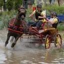L'attelage en compétition à Saumur [PHOTO]   My Angers.info   Cheval et sport   Scoop.it